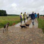 Teckels, Braques et Bergers en promenade