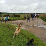 Promeneurs et leur chien en sortie dans les champs