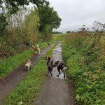 Braque allemand avec Bouledogue et Husky