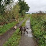 Braque allemand, Bouledogue et Husky sibérien le long d'un bosquet