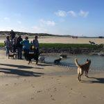 Balade canine à la mer organisée par Julie Willems, comportementaliste pour chiens