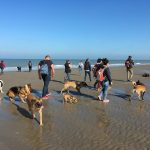 Balade canine à la mer organisée par Julie Willems, comportementaliste animalier