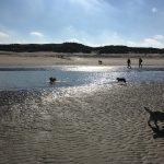 Cairn-terrier courant sur la plage