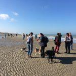 Moment de détente pour maitres et chiens à la mer