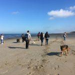 Chemin tracé sur le sable par les chiens et les promeneurs