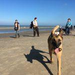 Berger belge malinois sur la plage