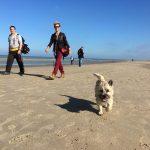 Cairn-terrier à la mer