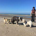 Rencontre entre Bearded Collie, Shih tzu et Cairn terrier