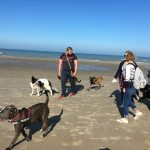 Activités canines à la mer