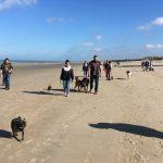 Excursion à la mer pour maitres et chiens