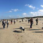 Randonnée canine à la mer