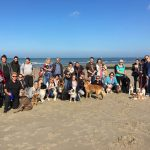 Balade canine à la mer par comportementaliste pour chiens