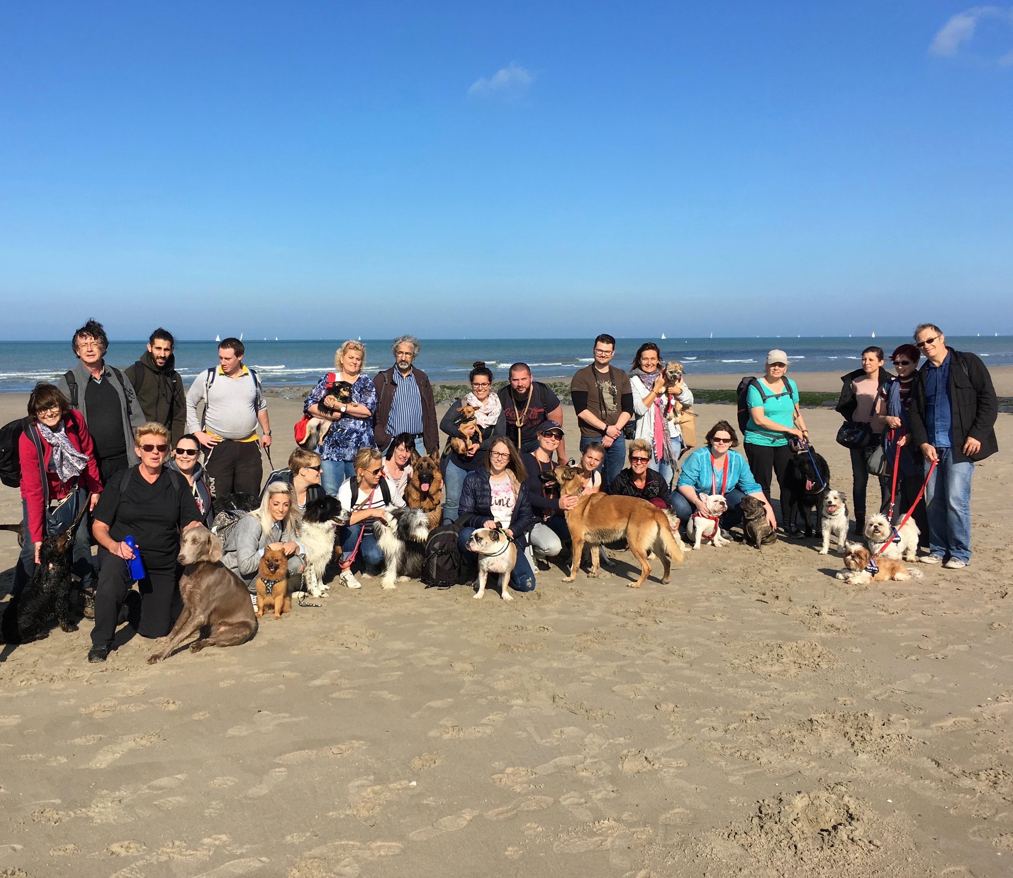 Photo de groupe de la balade canine à la mer