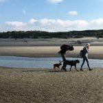 Loulou de Poméranie et American Staffordshire marchant derrière leur maitre