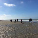 Chiens marchant sur le sable mouillé