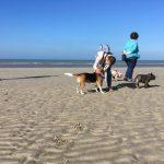 Bouledogues français, Pinscher et Beagle à la mer