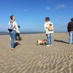 Soleil et plage, moment de bien-être pour maitres et chiens