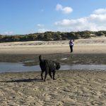 Bouvier des Flandres courant sur la plage