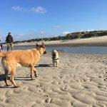 Berger malinois et Cairn terrier à la plage