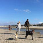 Cairn Terrier, Braque de Weimar et American staffordshire à la mer