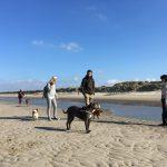 Amstaff avec son maitre sur la plage