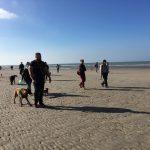 Sortie canine à la mer