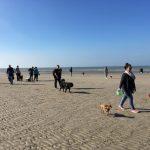 Bouvier des Flandres et Pinscher nain en promenade à la mer