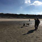 Trekking canin sur la plage