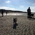 Chiens se dégourdissant les pattes sur le sable