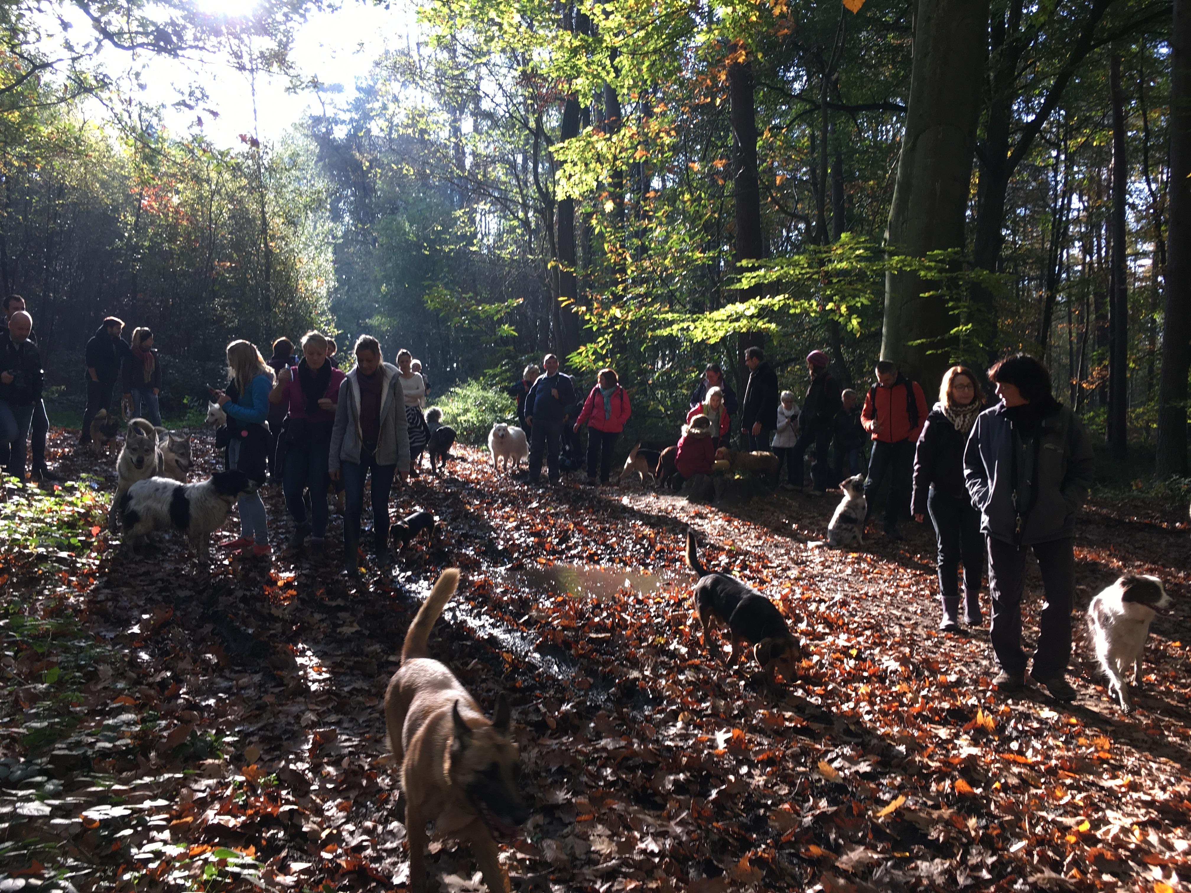 Grande balade canine en forêt