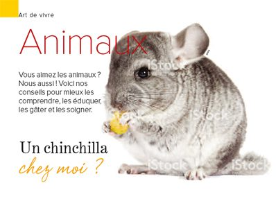 Comment prendre soin d'un chinchilla?