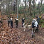 Rassemblement canin dans les bois