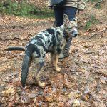 Très joli chien en excursion canine