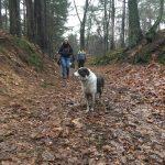 Border-collie en balade canine