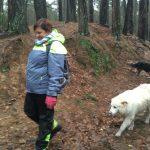 Berger Australien se promenant en forêt