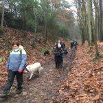 Marche canine dans un bosquet