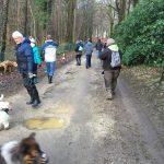 Groupe de chiens en randonnée à travers les bois