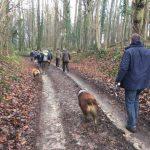 Expédition canine en forêt
