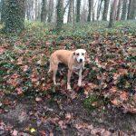 Sentier boisé ardu pour les chiens