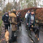 Berger de Beauce, Griffon fauve, Malinois et Border Collie en promenade