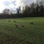 Course de chiens à travers champs
