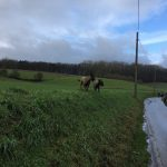 Bergers belges malinois sur une bute plombant la route