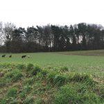 Groupe de chiens jouant dans les champs