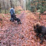 Moment de découverte et de jeux pour les chiens