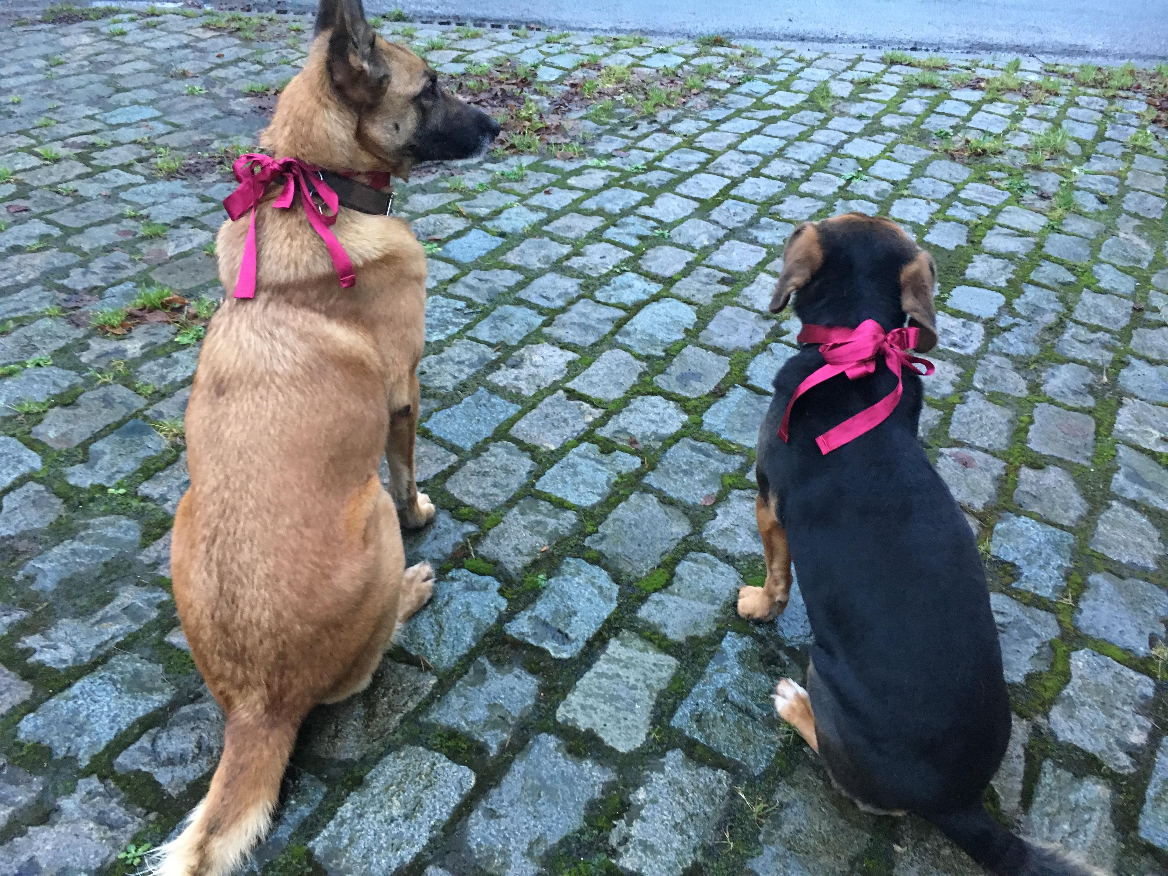 Kheops et Khephren à la balade canine de Noël