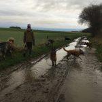 Berger allemand, Berger malinois et Berger australien barbotant dans la boue