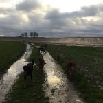 Course canine sur les sentiers