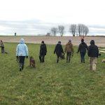 Berger Allemand en compagnie d'autres chiens