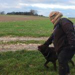 Labrador retriever appréciant les caresses