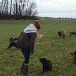 Berger Portugais et Bergers allemands s'amusant avec d'autres chiens